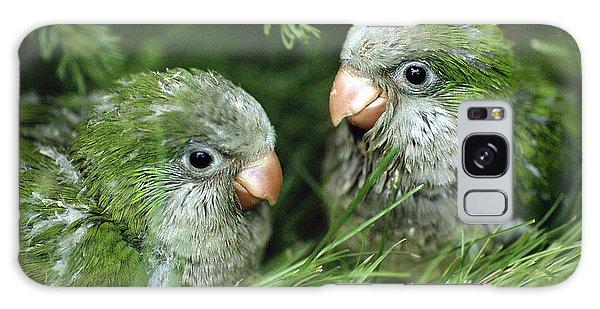 Monk Parakeet Chicks Galaxy Case