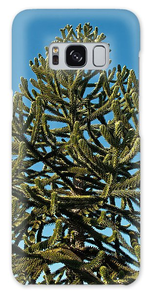 Monkey Puzzle Tree E Galaxy Case