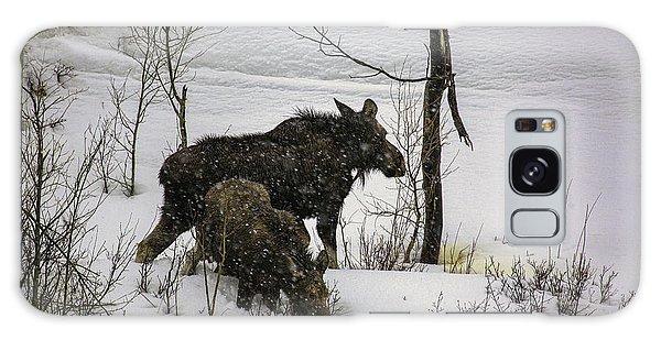 Moose Cow With Calf Galaxy Case by Susi Stroud