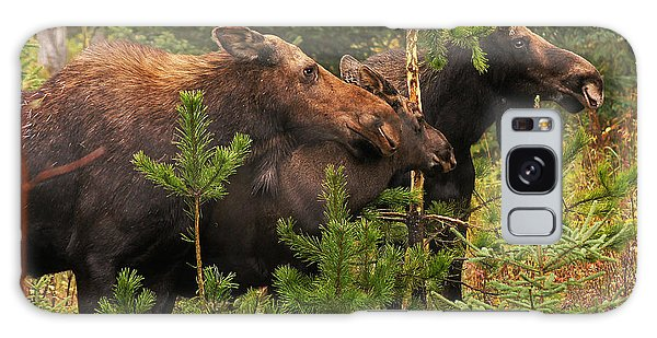 Moose Family At The Shredded Pine Galaxy Case by Stanza Widen