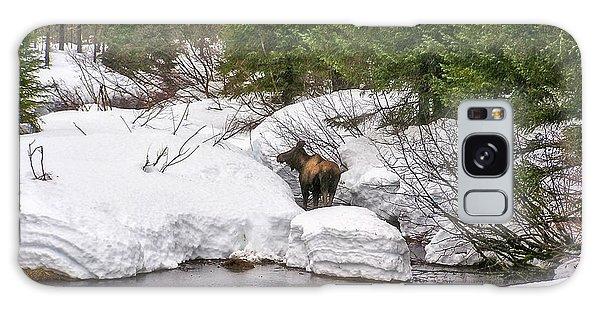 Moose In Alaska Galaxy Case