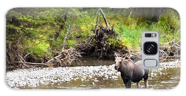 Moose In Yellowstone National Park   Galaxy Case