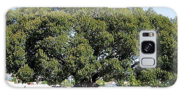 Moreton Fig Tree In Santa Barbara Galaxy Case