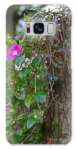 Morning Glory On The Fence Galaxy Case by Denise Romano