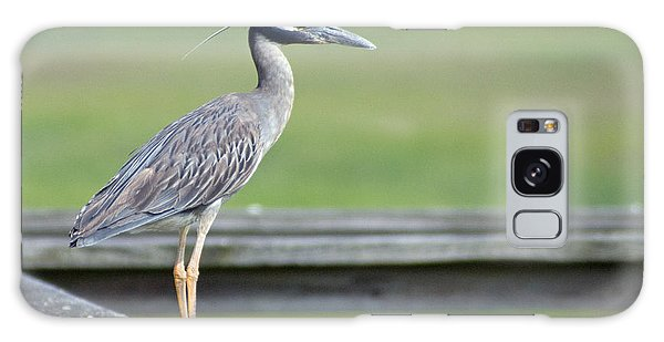 Morning Treasure Night Heron Galaxy Case by Greg Graham