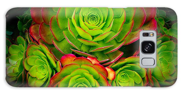 Morro Bay Echeveria Galaxy Case by Terry Garvin