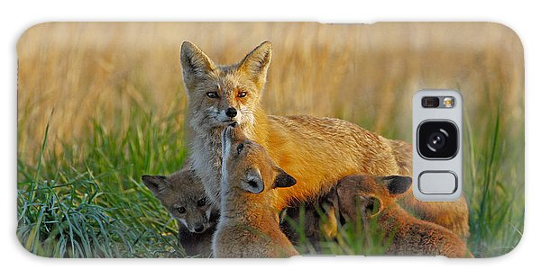 Mother Fox And Kits Galaxy Case