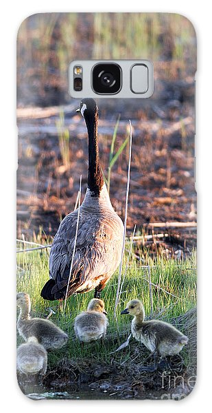 Mother Goose And Goslings Galaxy Case