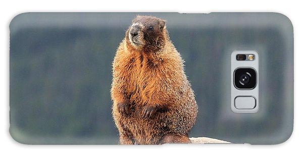 Mother Marmot Galaxy Case