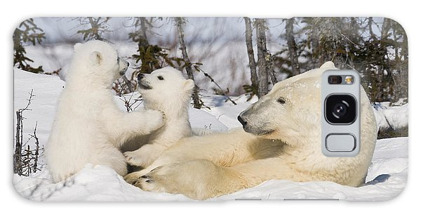 Mother Polar Bear Watches Her Cubs Play Galaxy Case