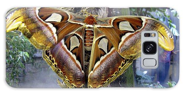 Atlas Moth Galaxy Case