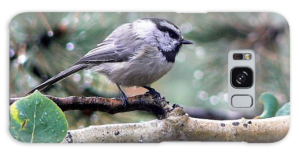 Mountain Chickadee On A Rainy Day Galaxy Case