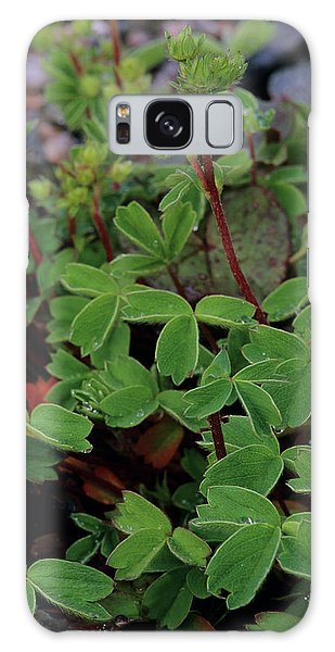 Cairngorms National Park Galaxy Case - Mountain Sibbaldia Leaves by Duncan Shaw/science Photo Library