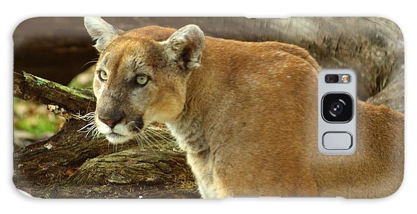 Mountian Lion Galaxy Case by Donald Williams