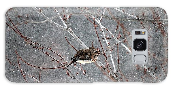 Galaxy Case - Mourning Dove Asleep In Snowfall by J McCombie