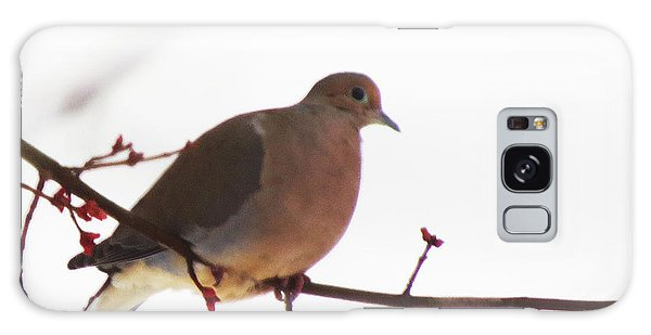 Mourning Dove In Snow Glow Galaxy Case