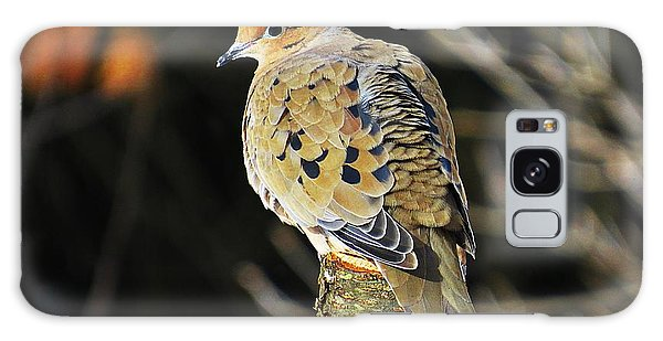 Mourning Dove On Post Galaxy Case