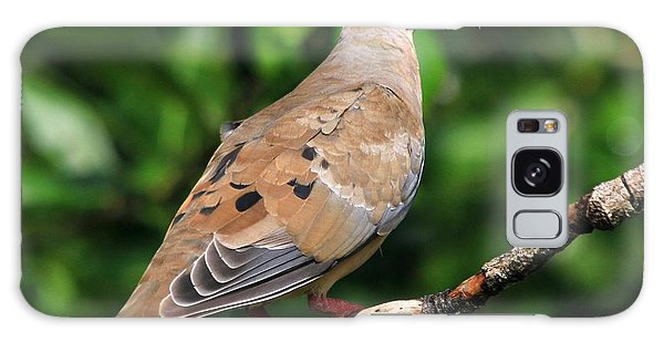 Mourning Dove Posing Galaxy Case
