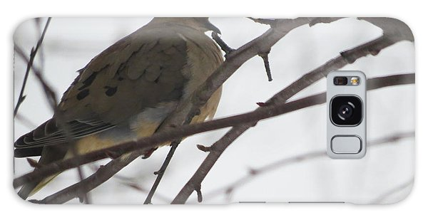Mourning Dove Resting Galaxy Case