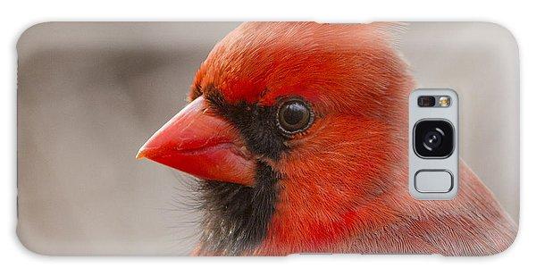 Mr Cardinal Portrait Galaxy Case by Mircea Costina Photography
