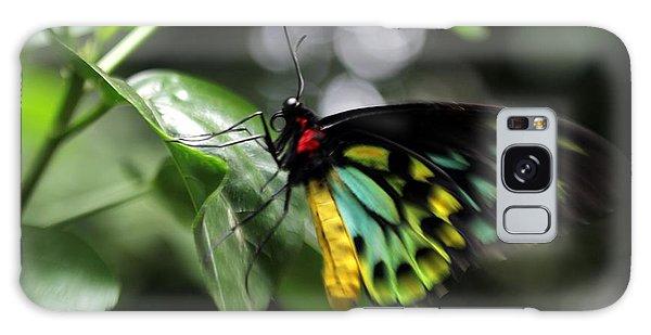Mr. Cairns Birdwing Galaxy Case by Mary Lou Chmura