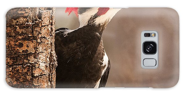 Mr. Pileated Galaxy Case