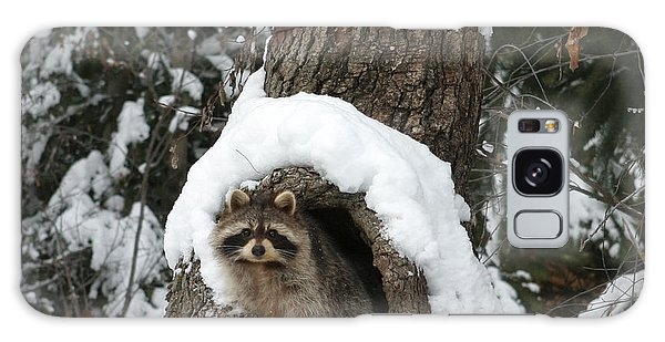 Mr. Raccoon Galaxy Case