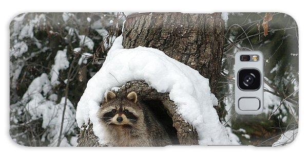 Mr. Raccoon Galaxy Case
