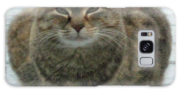 Muffin The Feral Cat Galaxy Case