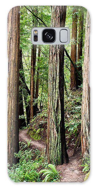 Muir Woods Galaxy Case