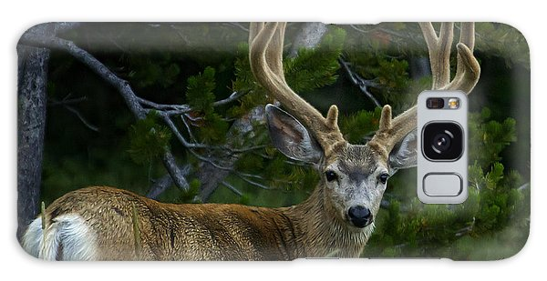 Mule Deer 4x4 In Velvet-signed  #4213 Galaxy Case