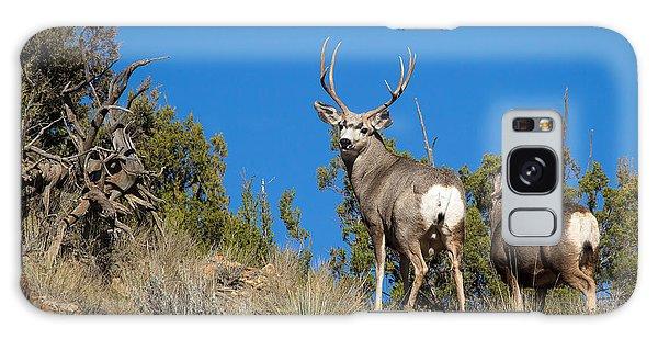 Mule Deer Buck Galaxy Case