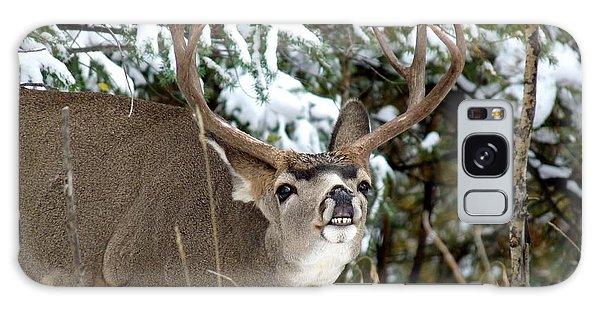 Mule Deer - Flehmen Response Galaxy Case by Marilyn Burton