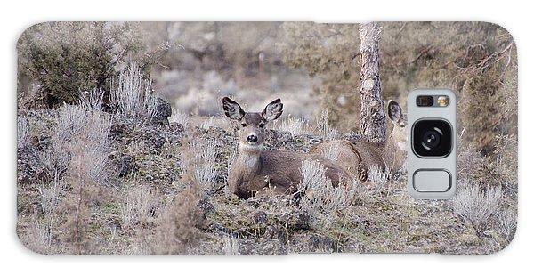 Mule Deer Nap Galaxy Case