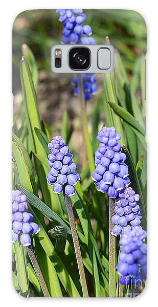 Muscari Armeniacum Galaxy Case