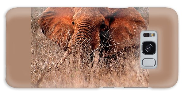 My Elephant In Africa Galaxy Case by Phyllis Kaltenbach