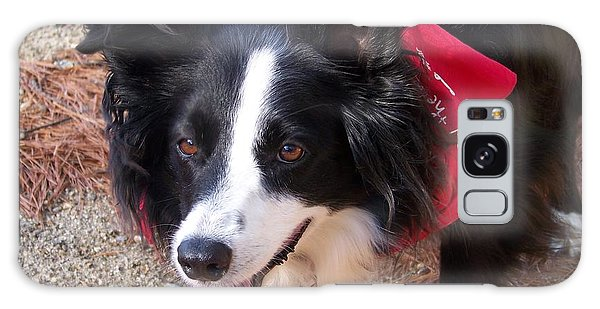 Female Border Collie Galaxy Case by Eunice Miller