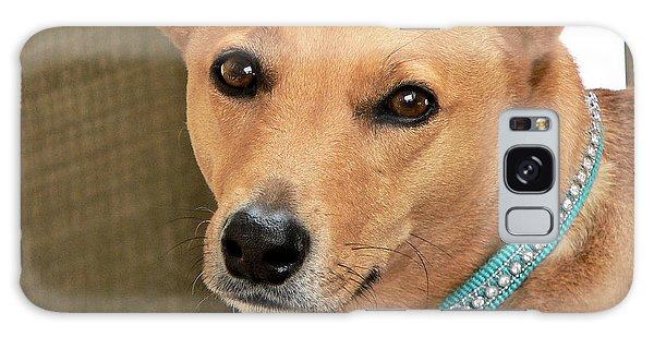 Dog - Cookie One Galaxy Case