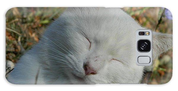 Napping Barn Cat Galaxy Case by Kathy Barney
