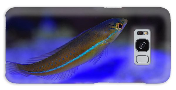 Neon Wrasse  Galaxy Case