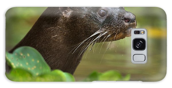 River Otter Galaxy Case - Neotropical Otter Lontra Longicaudis by Panoramic Images
