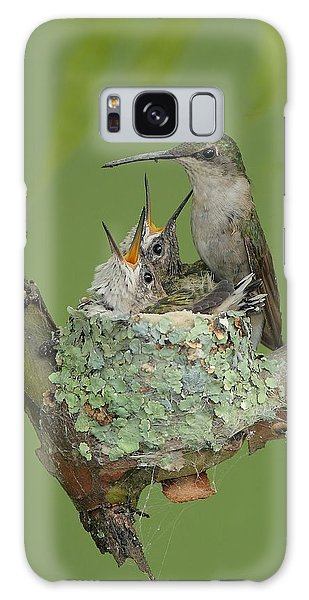 Nesting Hummingbird Family Galaxy Case by Daniel Behm