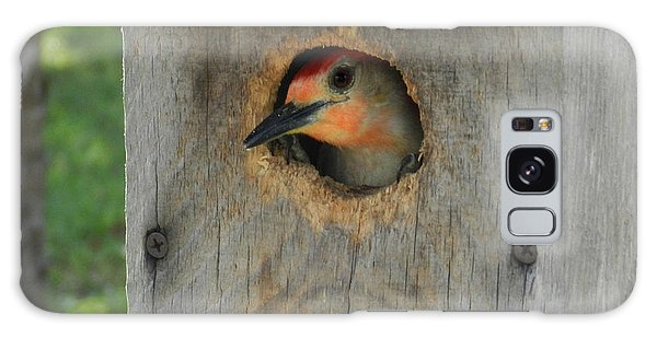 Nesting Woodpecker Galaxy Case