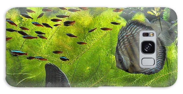 New York Aquarium Fish Galaxy Case