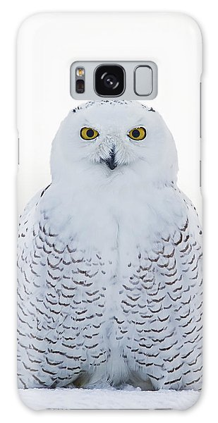 Nh Seacoast Snowy Owl  Galaxy Case