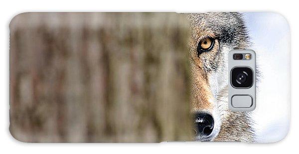 North American Gray Wolf Behind Tree Galaxy Case