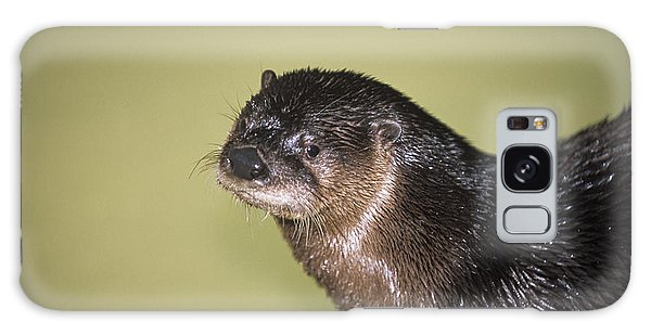 River Otter Galaxy Case - North American River Otter by Sally Mccrae Kuyper/science Photo Library