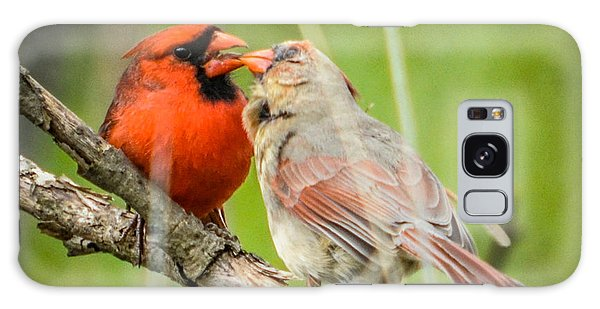 Northern Cardinal Male And Female Galaxy Case