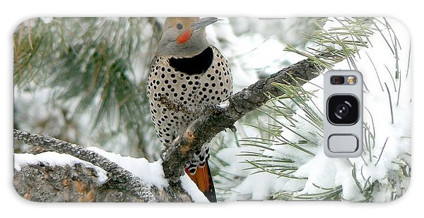 Northern Flicker On Snowy Pine Galaxy Case