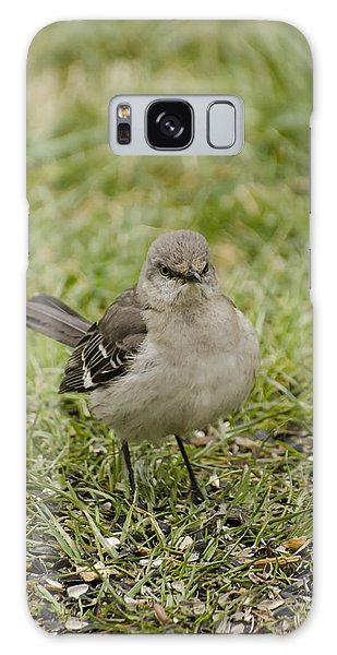 Northern Mockingbird Galaxy Case